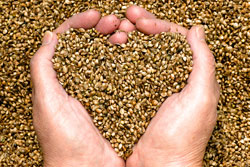hemp-seeds-heart-shaped-hands.jpg